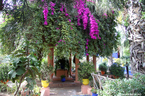 /Images/Marrakech-flori.jpg