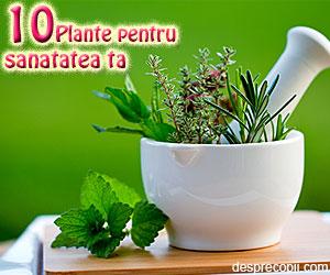 10 ierburi si condimente care te ajuta sa fii sanatos