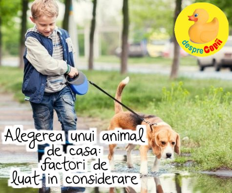 Alegerea unui animal de casa: factori esentiali de luat in considerare