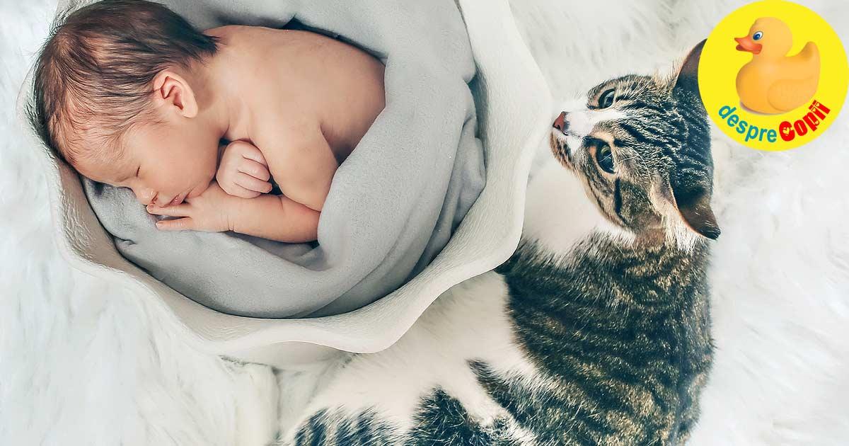 Cum facem cunostinta pisicii cu nou-nascutul si cum ne asiguram ca stie regulile