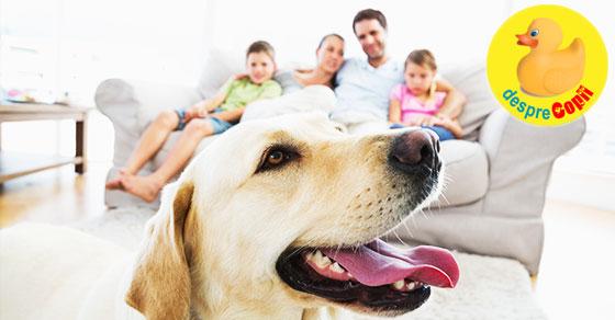 Momente ale vietii noastre cu Ares - labradorul familiei
