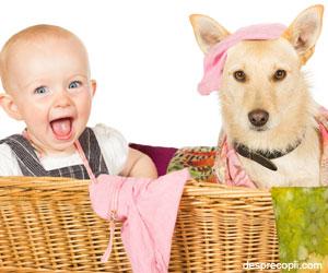 Vine bebelusul - renuntam la animalul de companie?