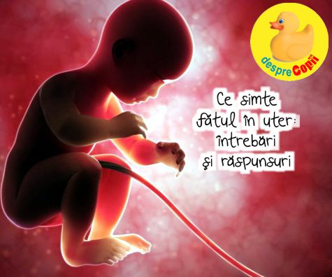 Ce simte fatul in uterul mamei: intrebari si raspunsuri