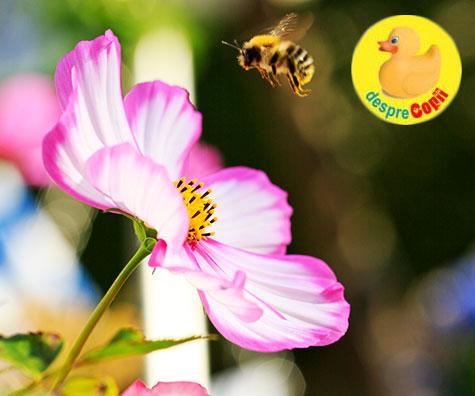 Albinele, ajutoarele noastre active, de neînlocuit în viețile noastre