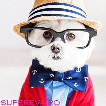 Hipsterii printre noi