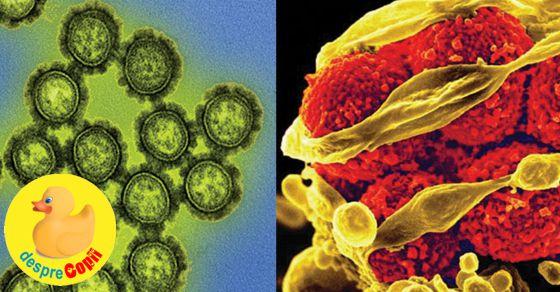 Diferenta dintre o infectie bacteriala si una virala