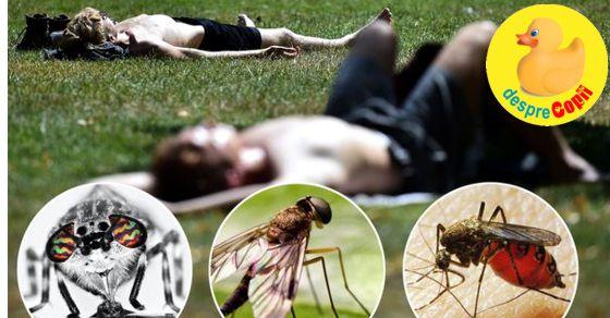 De ce insecte ne ferim vara si cum tratam intepaturile lor?