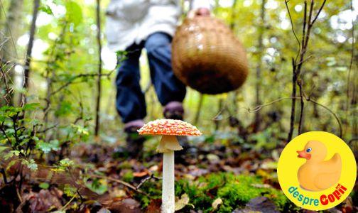 Intoxicatia cu ciuperci
