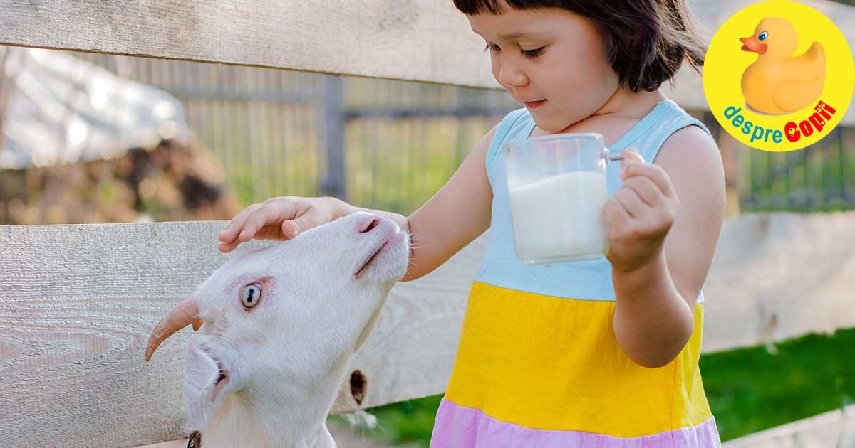Laptele de capra in alimentatia copilului - iata ce beneficii are si cand putem sa i-l oferim copilului