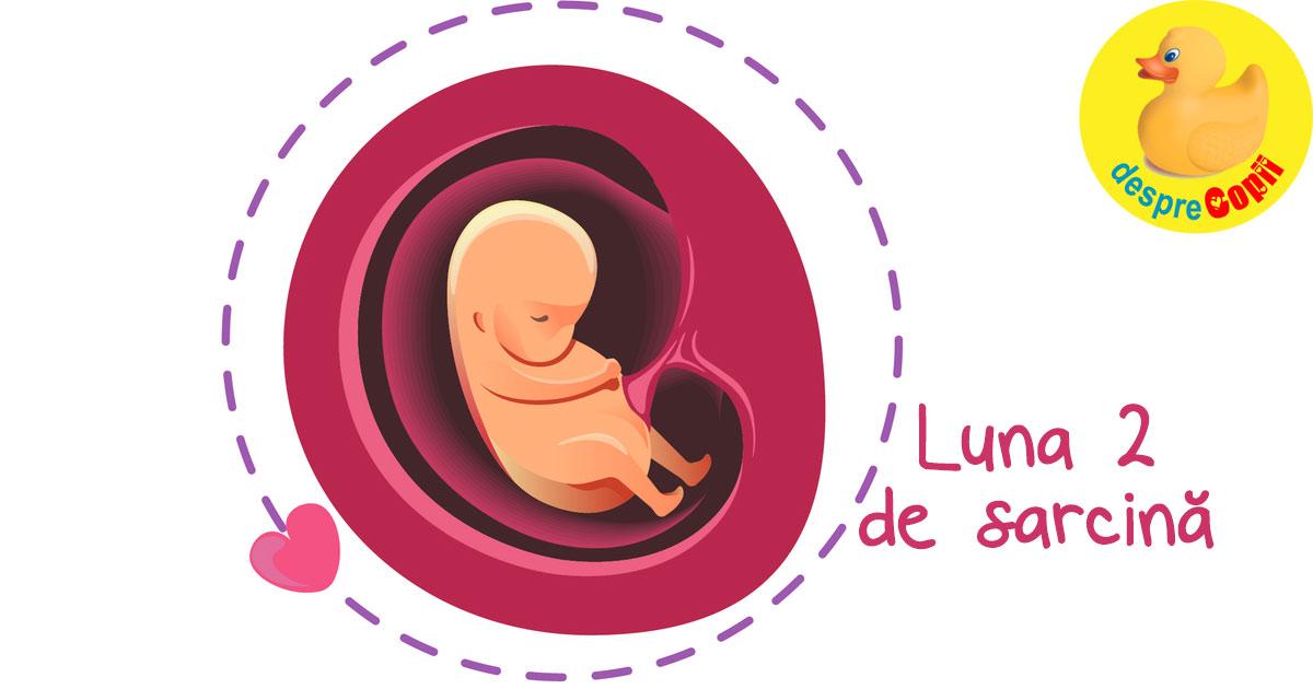 Luna 2 de sarcina: apogeul greturilor si prima bataie a inimii bebelusului tau