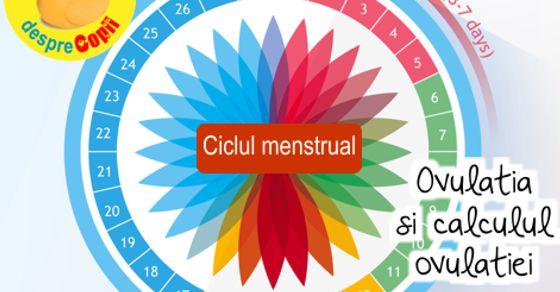 Ovulatia si calculul ovulatiei
