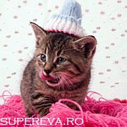 12 instantanee feline care va vor binedispune