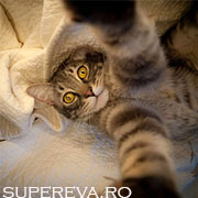 Si pisicile isi fac selfies