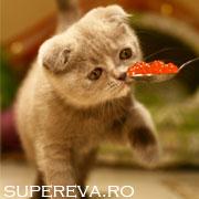 7 Alimente de evitat in dieta pisicutelor