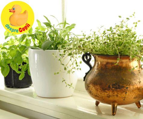Alaptarea si influenta unor plante