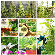 10 plante minune pentru sanatatea ta