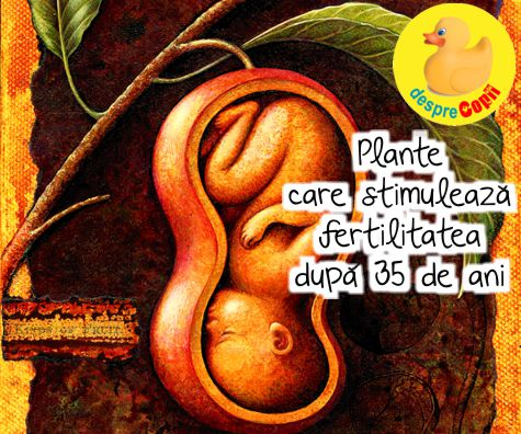 Plante care stimuleaza fertilitatea dupa 35 de ani