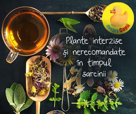 Plante interzise si nerecomandate in timpul sarcinii