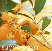 Apa de flori de portocal