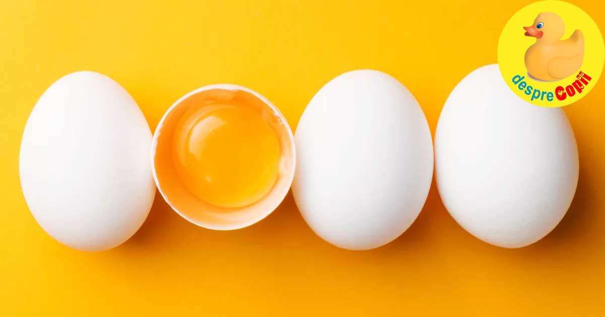 18 retete cu ou pentru bebelusi si copilasi - pline de proteine de calitate si vitamine esentiale