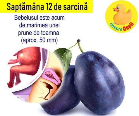 Saptamana 12 de sarcina
