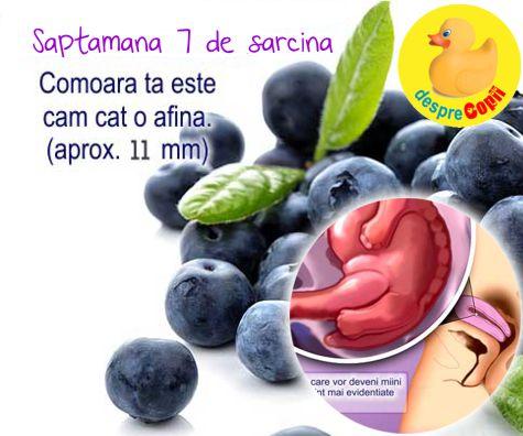 Saptamana a 7-a de sarcina