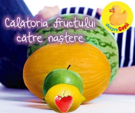 Sarcina pe saptamani, calatoria fructului catre nastere