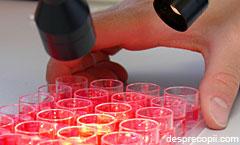 5 Intrebari si raspunsuri despre celulele stem