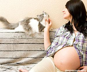 Despre gravidute si pisici