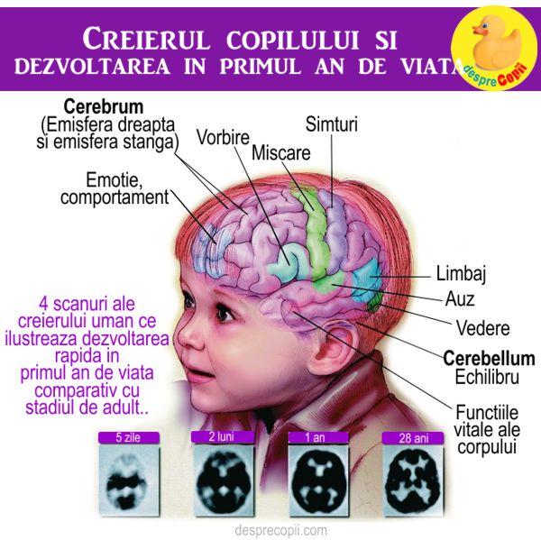 dezvoltarea bebelusului creier