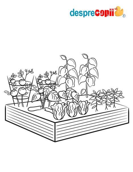 /Images/gradina legume.jpg