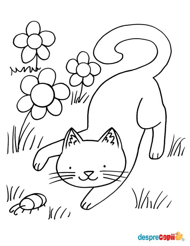 /Images/pisica si flori.jpg