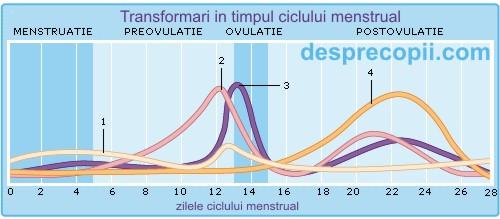 calcul ovulatie