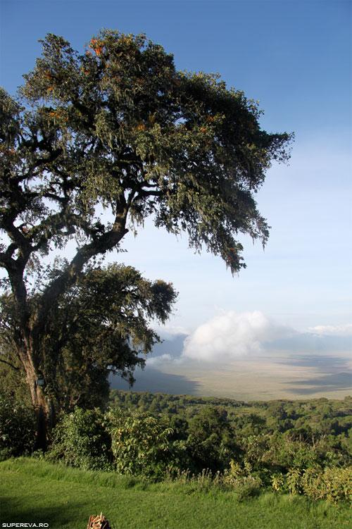 /Images/tanzania2.jpg