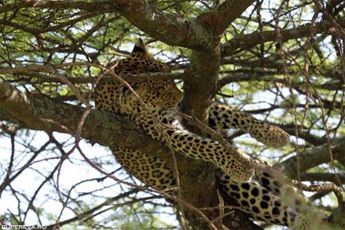 /Images/tanzania7.jpg