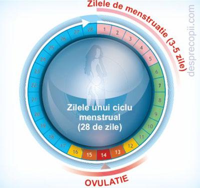 /Images/tata-zile-menstruatie.jpg