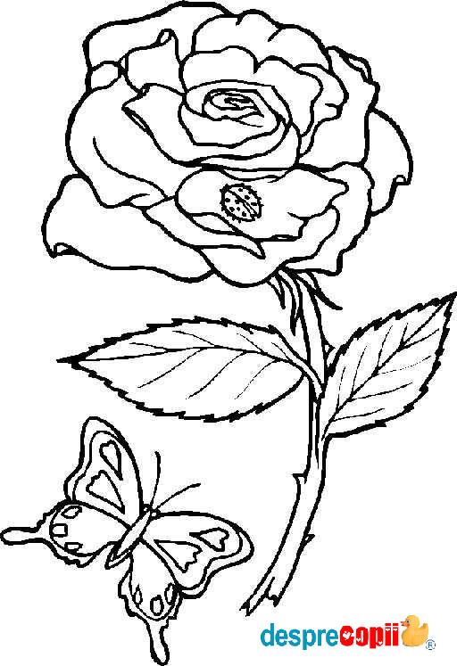 /Images/trandafir.jpg