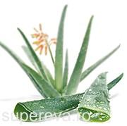Aloe Vera sau planta nemuririi