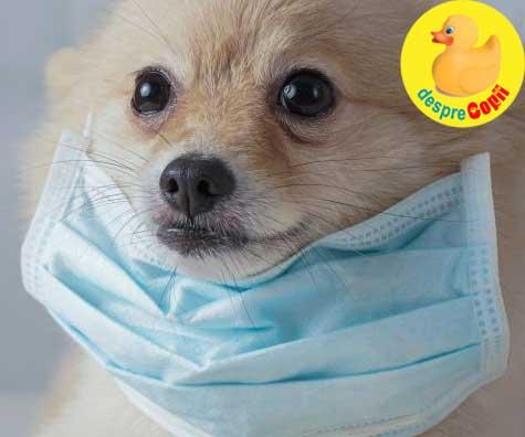 Ar putea avea animalul tau de casa coronavirus? Iata la ce trebuie sa fii atent