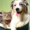 Infectiile transmise de animalele de companie  (de casa)