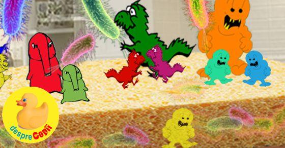 Buretele de bucatarie, hotelul bacteriilor din casa