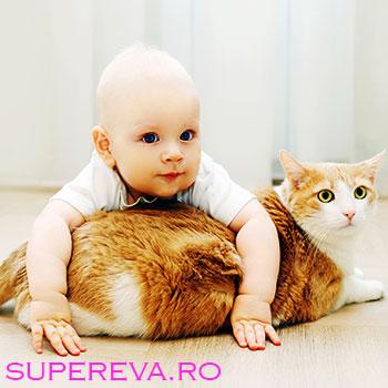 5 mituri spulberate despre pisici si copii