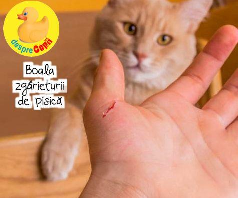 Boala zgarieturii de pisica. Simptomele infectiei si tratament.
