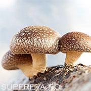 Ciupercile ajuta la lupta impotriva cancerului