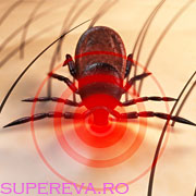 Despre boala Lyme si cum ne protejam de muscatura de capusa?
