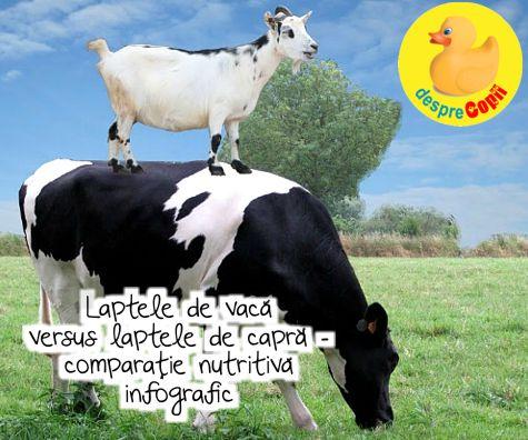 Laptele de vaca versus laptele de capra - comparatie nutritiva infografic