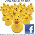 Desprecopii.com pe Facebook