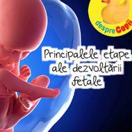 Principalele etape ale dezvoltarii fetale width=