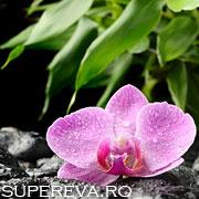 Feng Shui si plantele de interior