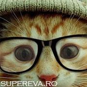 Fonturile preferate ale pisicilor